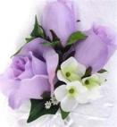 Roses-violet