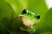 frog-peeking-out
